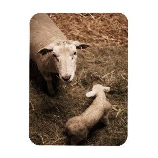 Sheepfold Magnet