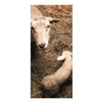 Sheepfold Rack Card
