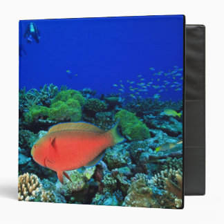 Sheephead Parrotfish Scarus Binder