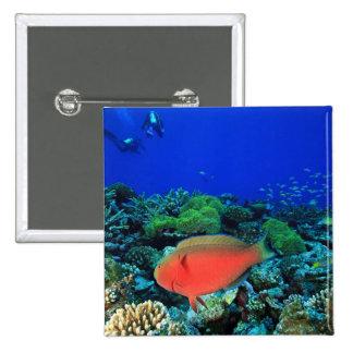 Sheephead Parrotfish Scarus Button