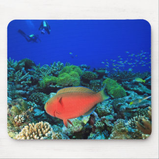 Sheephead Parrotfish Scarus Mouse Pad