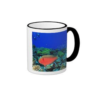 Sheephead Parrotfish Scarus Mug