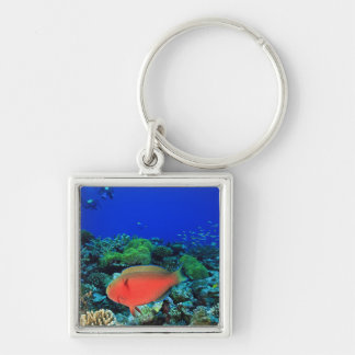 Sheephead Parrotfish Scarus Silver-Colored Square Keychain