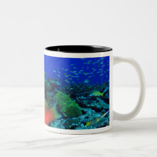 Sheephead Parrotfish Scarus Two-Tone Coffee Mug