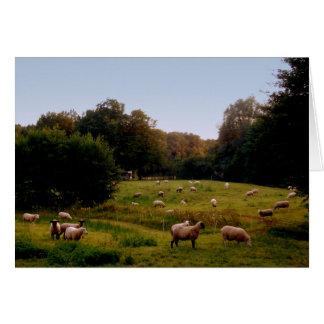 Sheepish Card