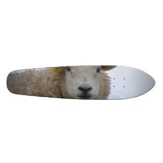 Sheepish Skate Board