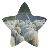 Sheeps in Ireland Star Sticker