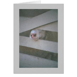 sheep's muzzle through fence card