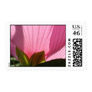 Sheer Pink Stamp