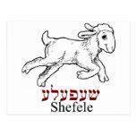 Shefeleh-pequeño cordero postal