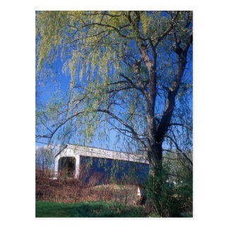 Sheffield Upper Covered Bridge Berkshires MA Postcard