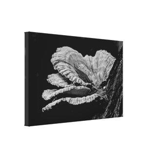 Shelf Fungi In Black And White Canvas Print
