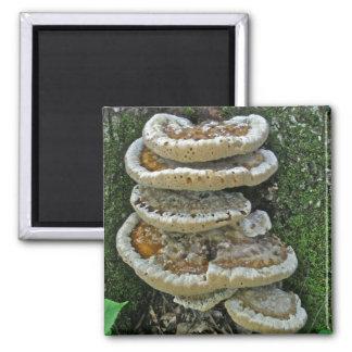 Shelf Fungi on Stump 2 Inch Square Magnet