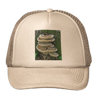 Shelf Fungi on Stump Trucker Hat