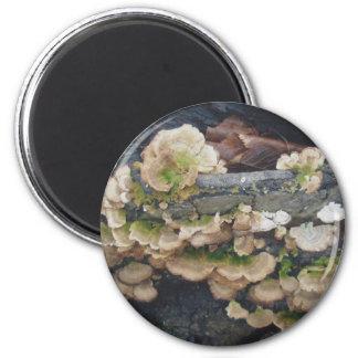 Shelf Fungus Colony Magnet