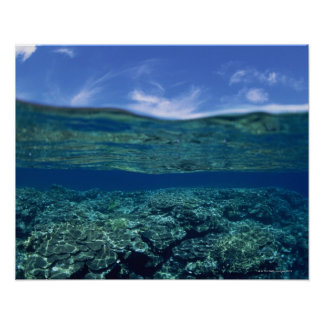 Shelf of coral poster