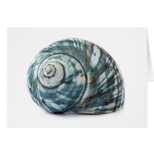 shell2 felicitación