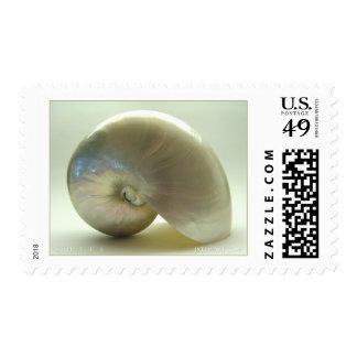 Shell #1 envio