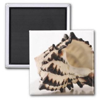 Shell 2 Inch Square Magnet