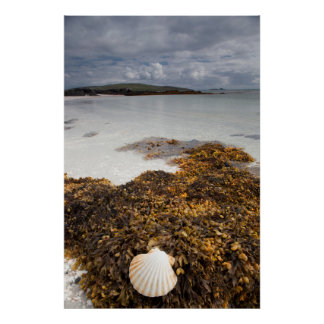 Shell And Seaweed | Isle Of Barra, Scotland Poster