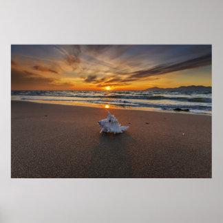 Shell At The Beach At Sunset   Kos Island Poster