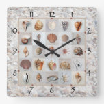 Shell Beach Clock