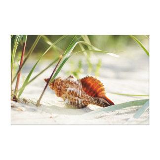 Shell beach of dreams canvas print