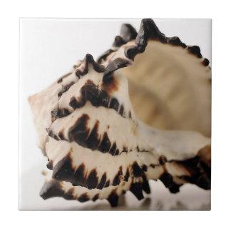 Shell Ceramic Tile