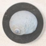 Shell Coaster - 1