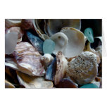 Shell Collected Greeting Card