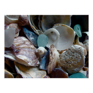 Shell Collected Print