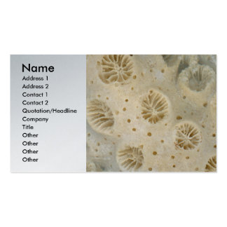 Shell - Conchology - Coral Business Card