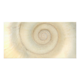 Shell - Conchology - White Spiral Photo Greeting Card
