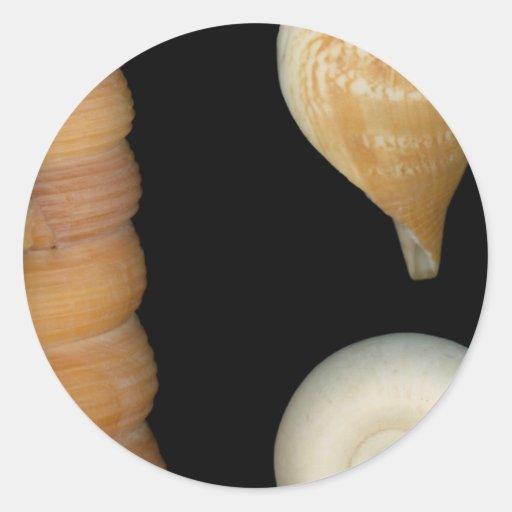 Shell - conquiliología - cáscaras pegatina redonda