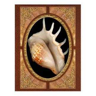 Shell - conquiliología - concha tarjeta postal