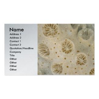 Shell - conquiliología - coral tarjetas de visita