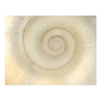 Shell - conquiliología - espiral blanco tarjetas postales