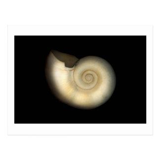 Shell - conquiliología - nautilus tarjetas postales