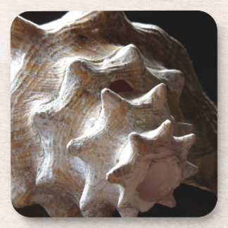 Shell Beverage Coasters