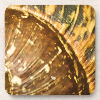 Shell Drink Coaster