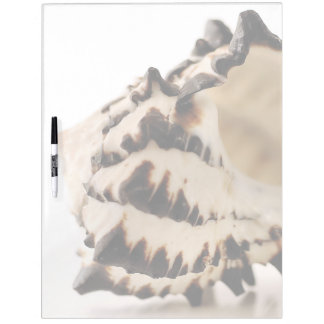 Shell Dry Erase Boards