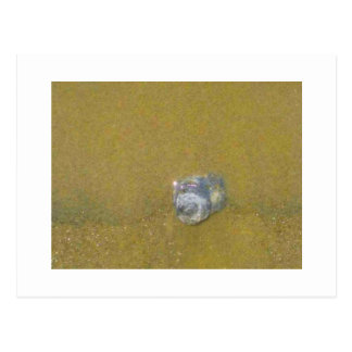 Shell en la arena postales
