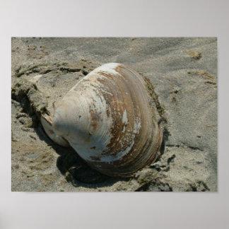 Shell en la playa póster