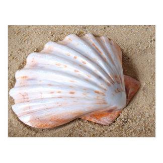 Shell en postal de la arena