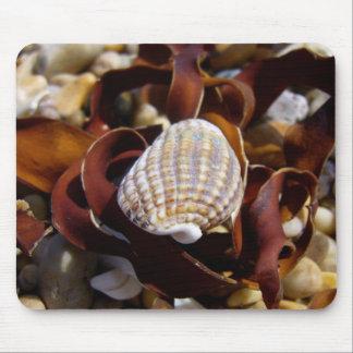 Shell en una cama de la alga marina mouse pads