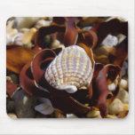 Shell en una cama de la alga marina tapete de raton