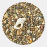 Shell entre los guijarros etiquetas