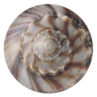 Shell espiral platos de comidas
