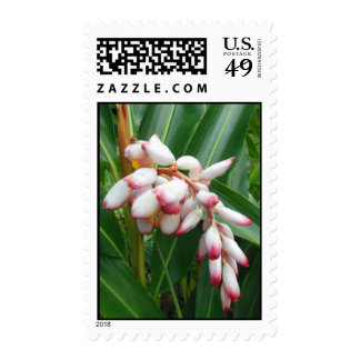 Shell Ginger Postage Stamps
