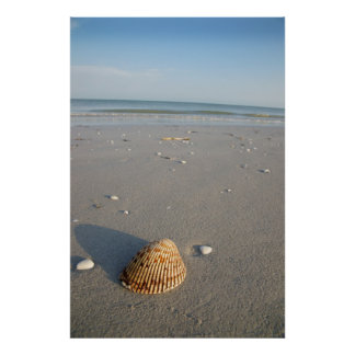 Shell Impresiones